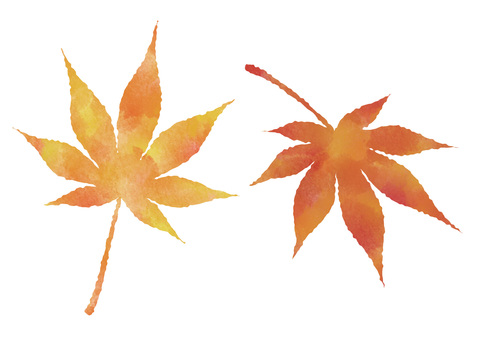2 kinds of watercolor maple