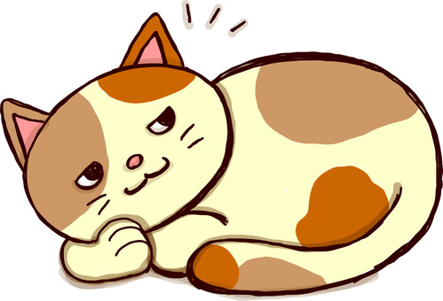 Calico cat woke up
