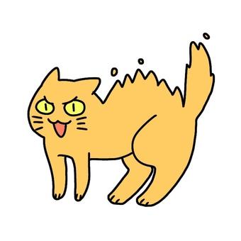 무시 무시한 고양이