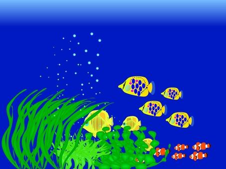Addition of a type of fish aquarium fish
