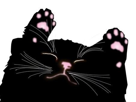 Aberdeen cat 13