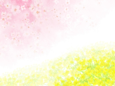 Cherry blossoms and canola background 2