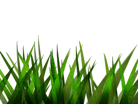 Ixia leaves