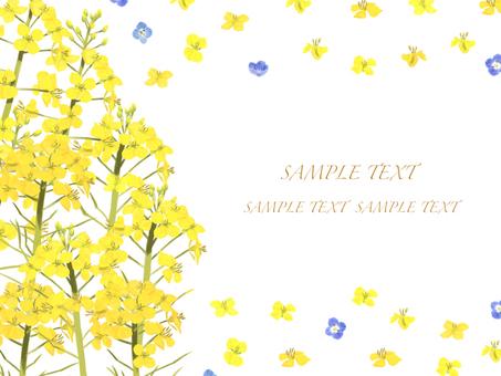 Spring Rape Flower 3 Background Frame / Card