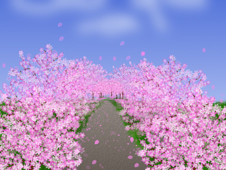 Cherry blossom trees Ⅱ