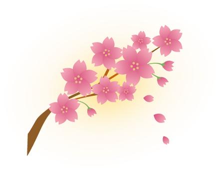 벚꽃 -014