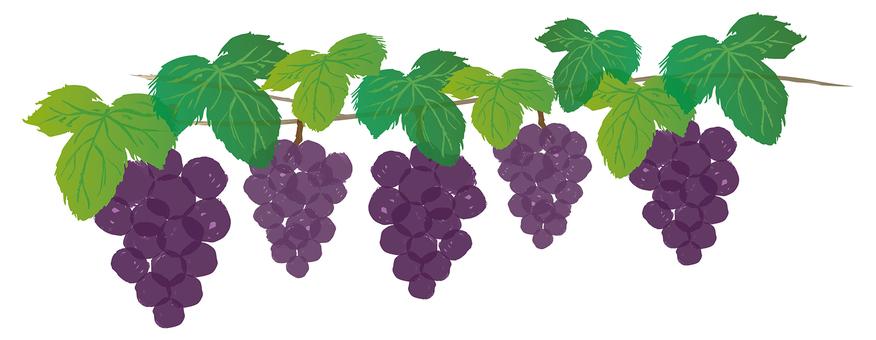 手描きのぶどう紫