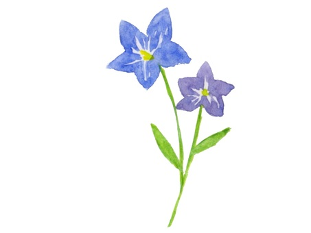 Campanulaceae 2