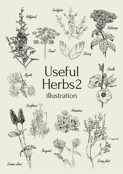 Useful herb illustrations 2