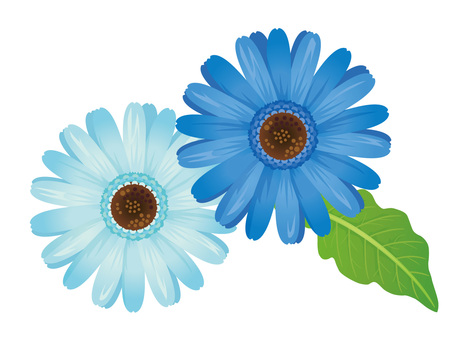 淡藍色切出的淡藍色非洲菊02