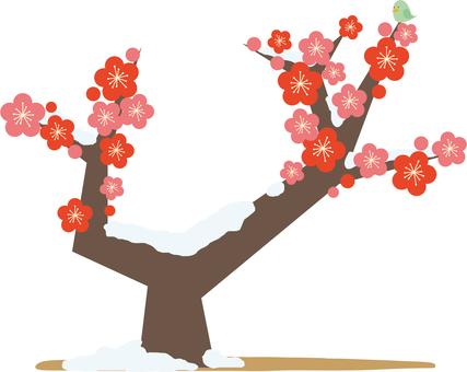 Plum tree, plum blossoms (no sky)