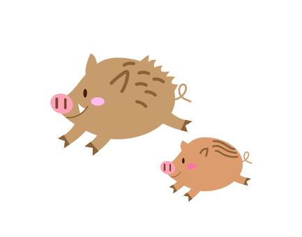 Wild boar 1