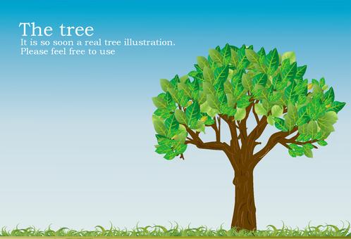 The tree1