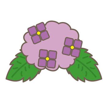 Hydrangea (purple color)