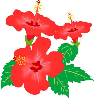 Hibiscus material 2