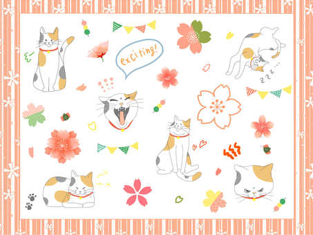 Spring cat
