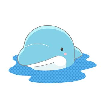 Appearance dolphin