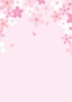 Sakura 54