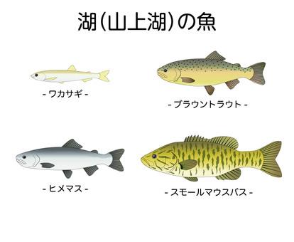 山上湖の魚