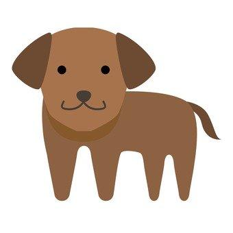강아지 7