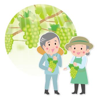 Muscat farmer