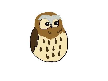 Owl color