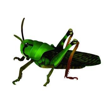 메뚜기 2