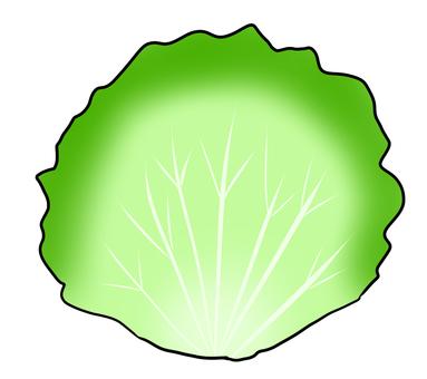 1 lettuce