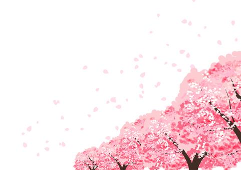 Cherry blossom tree single-sided ant