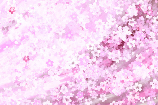 Cherry blossom trees in full bloom background material