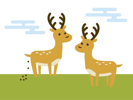 Deer and poop-deer & shit-