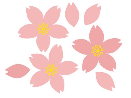벚꽃과 꽃잎