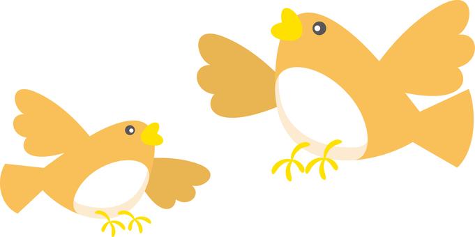 Lark bird wild bird spring bird