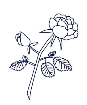 Rose, rose drawing