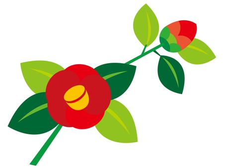 Camellia _ 2