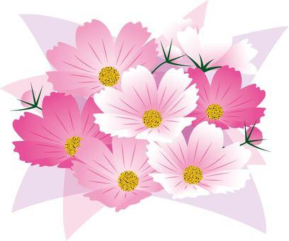 코스모스 꽃다발 / 타입 f / uta