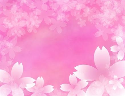 Sakura Multiple Background Pink