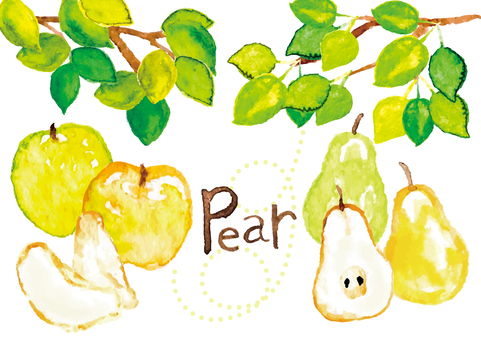 << Watercolor style >> pear / pear