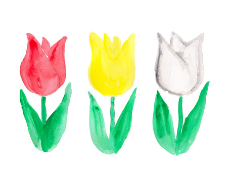 3 color tulip