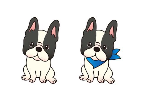 Dog _ French Bulldog
