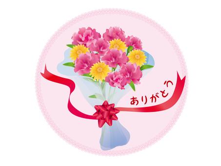 Carnation 02