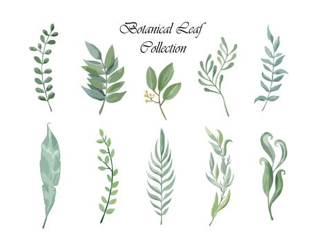 Botanical leaf collection