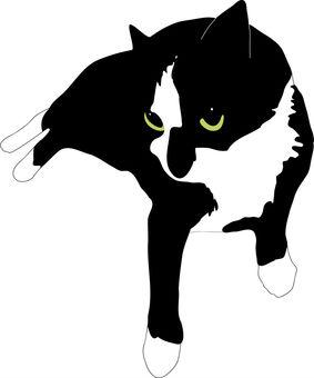 Black and white Nyanko