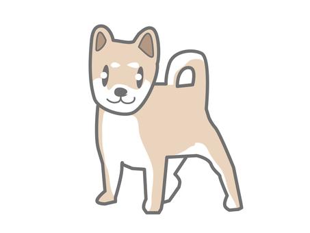 Dog dog Shiba Inu