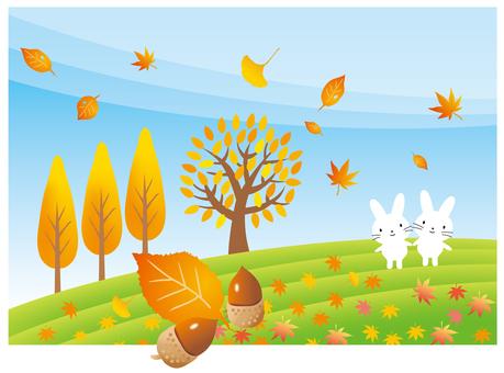 낙엽과 토끼의 오후