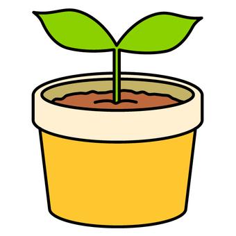 Seedlings / eco (yellow