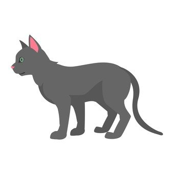 Cat - gray cat