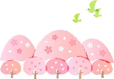 200202. 벚꽃 나무와 산