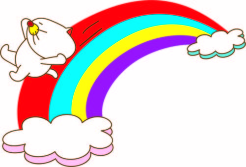 Amusing cat Tachiko and a rainbow