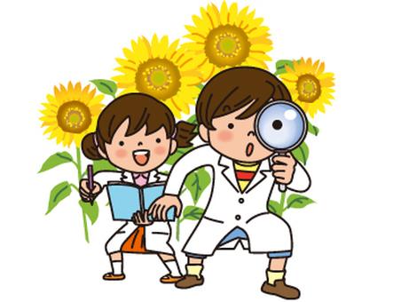 Summer vacation free study - no sunflower line